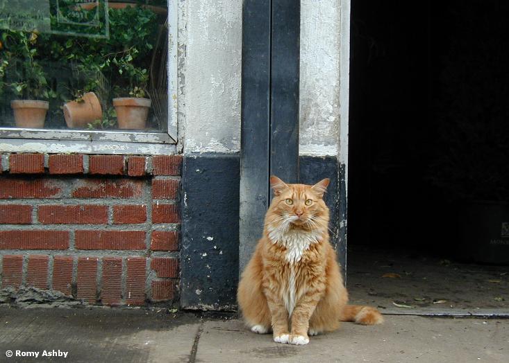 Tigger the flower district cat - copyright Romy Ashby