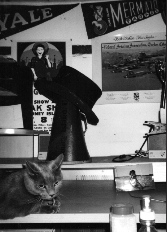 Hijinx Cat on a desk - copyright Romy Ashby 2004